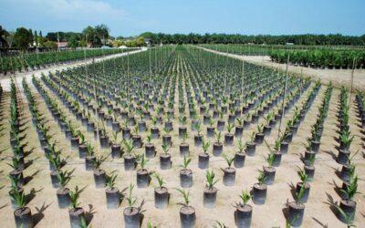 United-Plantation-Berhad-UIP (1)